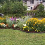 Perennial Garden Plans for Zone 6