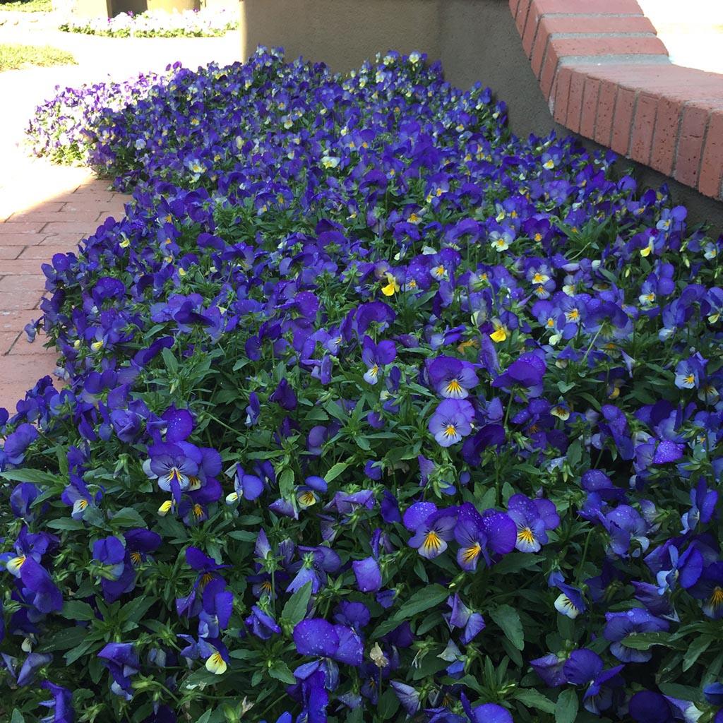 Perennials bloom all summer long garden design ideas perennials bloom all summer long mightylinksfo Image collections