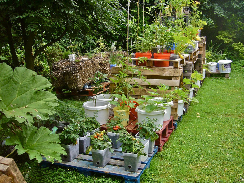 Planning a Container Vegetable Garden