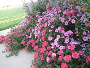 Planning a Flower Garden with Perennials