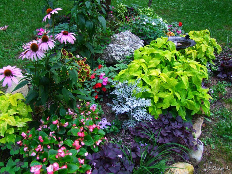 planning a perennial flower garden garden design ideas