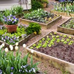 Planning a Raised Vegetable Garden