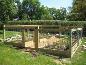 Planning a Vegetable Garden Layout Raised Beds