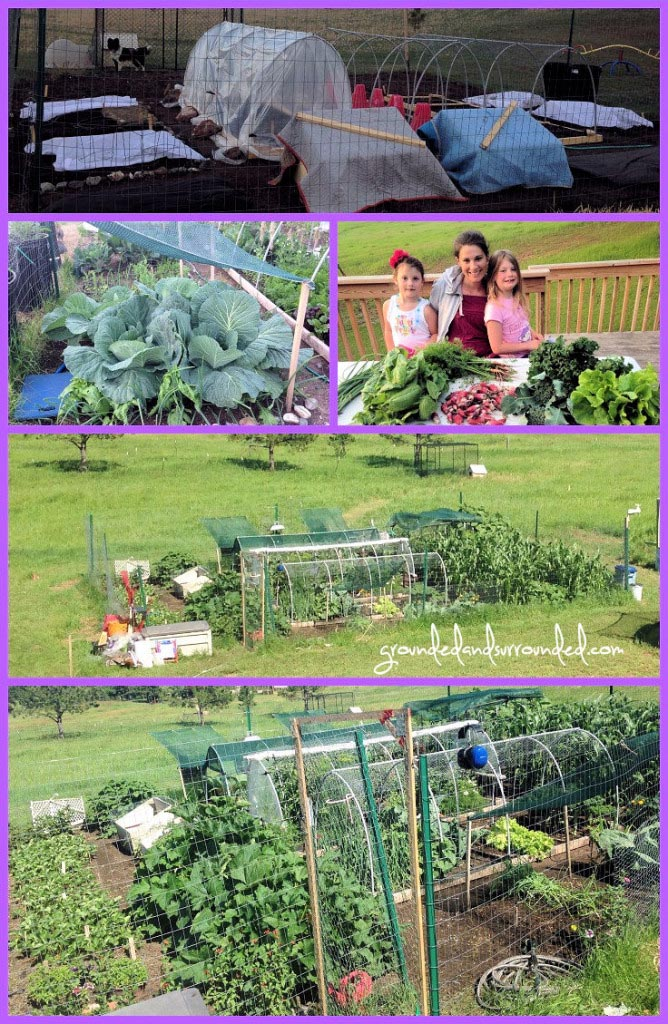 Planning out a vegetable garden garden design ideas for Best vegetable garden planner