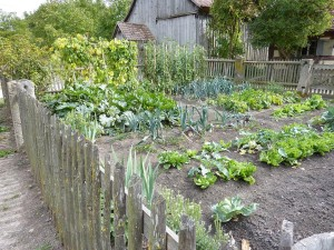 Plans for Vegetable Garden Layout