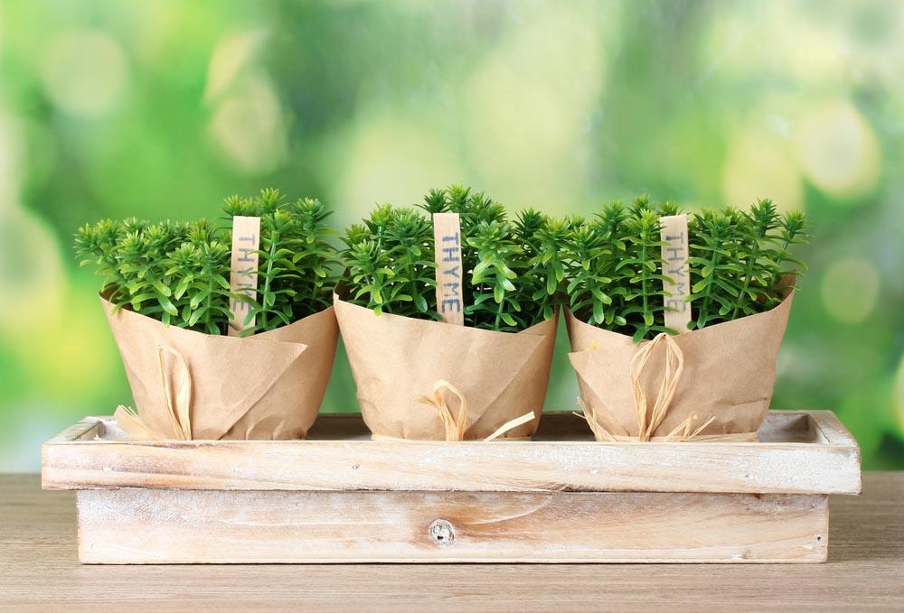 Plant Outdoor Herb Garden