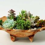 Plant Succulent Container Garden
