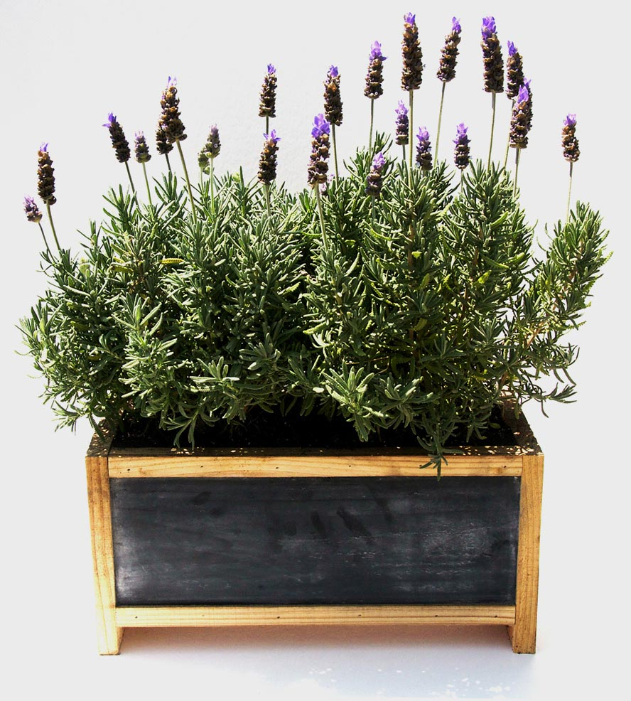 Planter Box Herb Garden