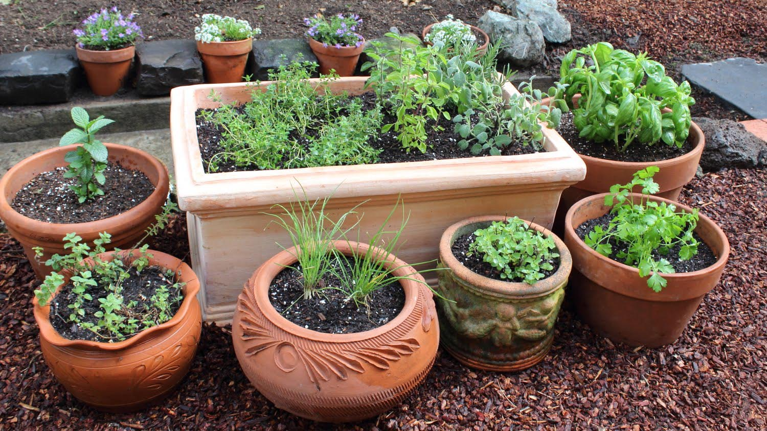 Planting a Small Herb Garden