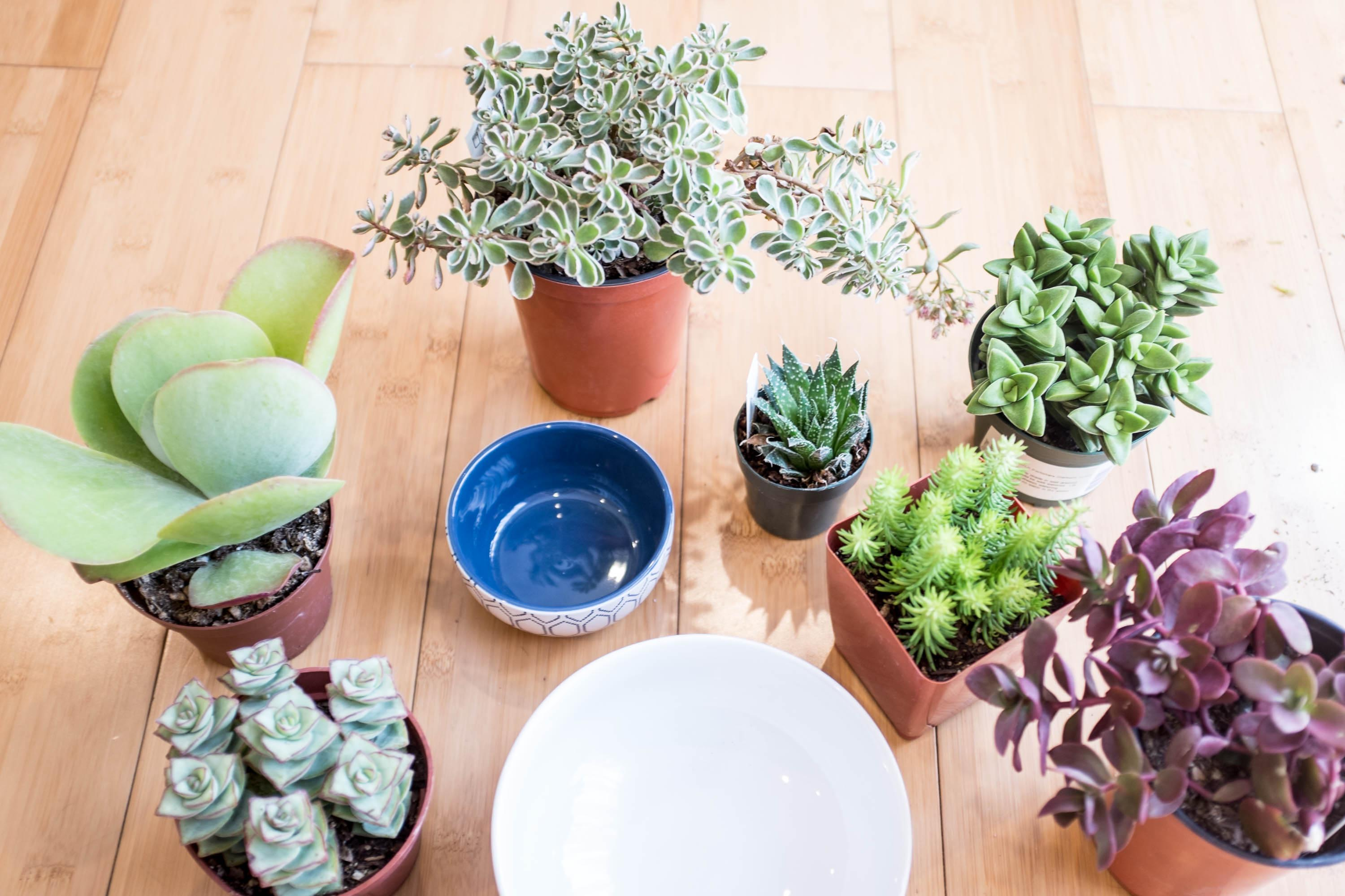 Planting a Succulent Container Garden