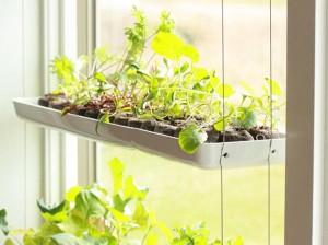 Planting an Herb Garden Indoors