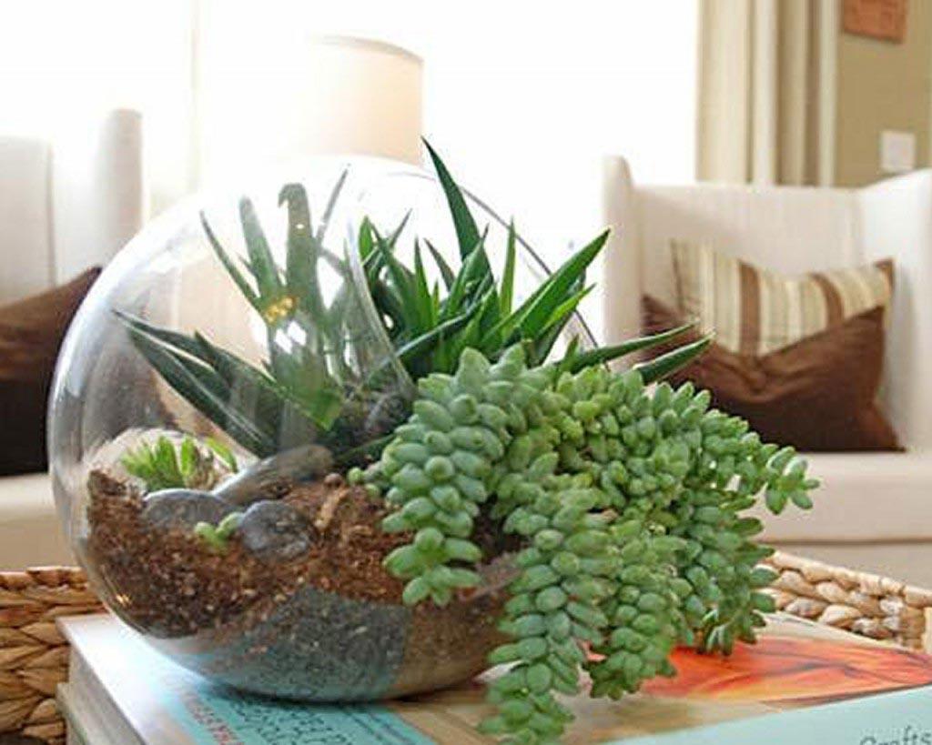 Planting an Indoor Succulent Garden