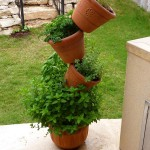 Planting Herbs Outdoor Garden