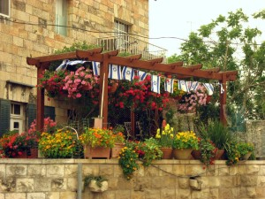 Planting Patio Herb Garden