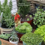 Plants for Outdoor Fairy Gardens