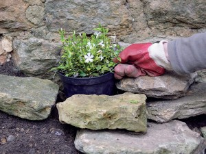 Plants for Shaded Rock Gardens