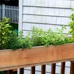 Potted Herb Garden Design