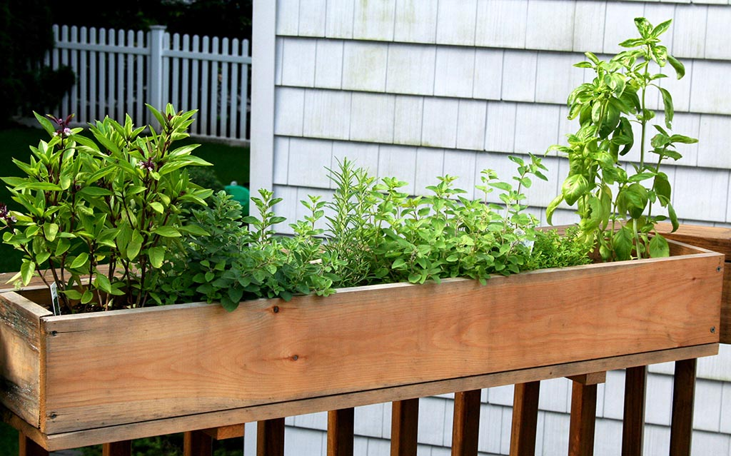 Potted Herb Garden Design