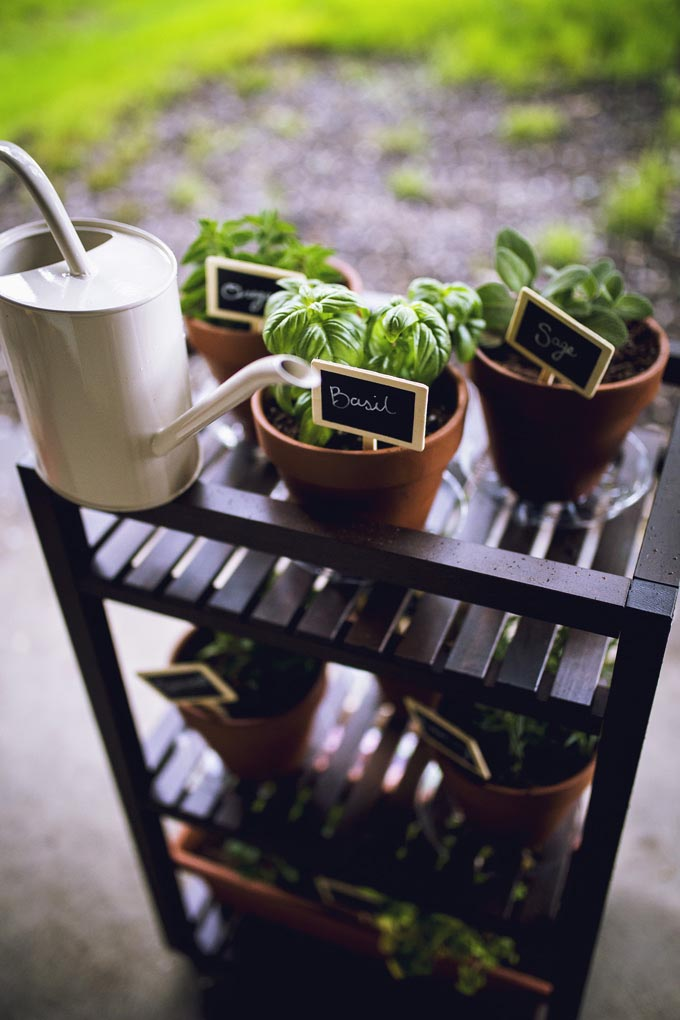 Potting Mix for Herb Garden