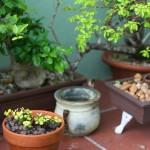 Pre Planned Gardens Perennials