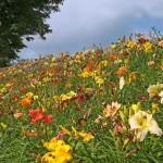 Pre Planned Perennial Flower Garden