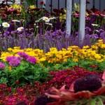 Pre Planned Perennial Garden Designs