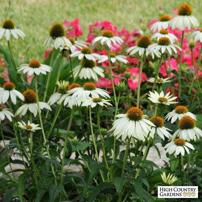 Pre Planned Perennial Shade Garden