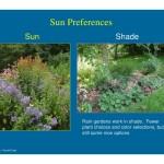 Rain Garden Plants Shade