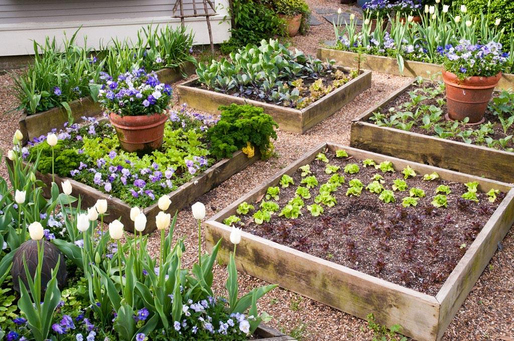 Raised Bed Herb Garden Layout