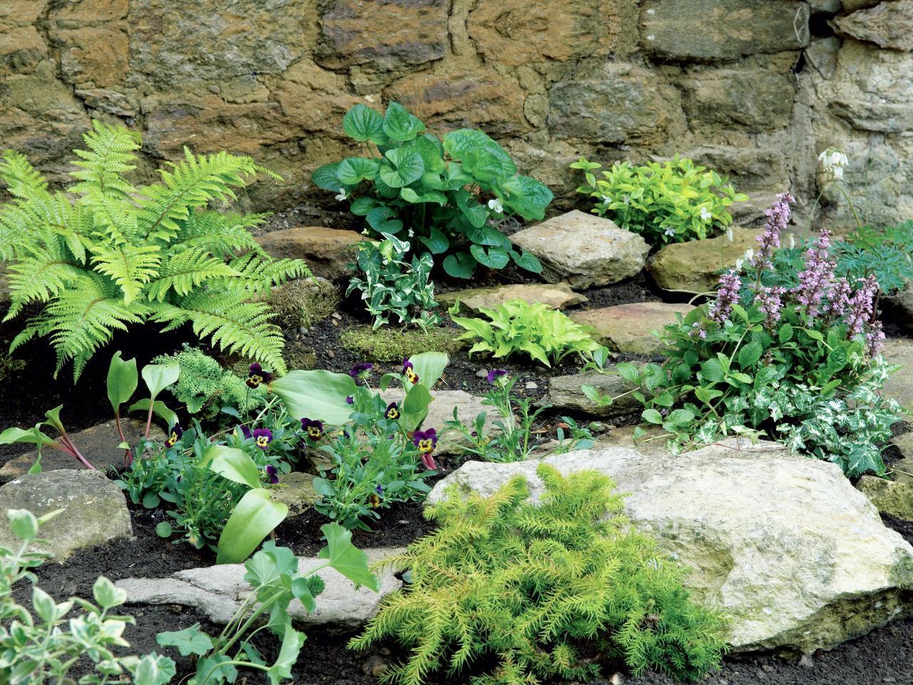 Rock Garden Shade Plants
