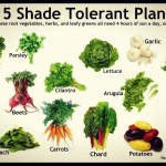 Shade Loving Garden Plants