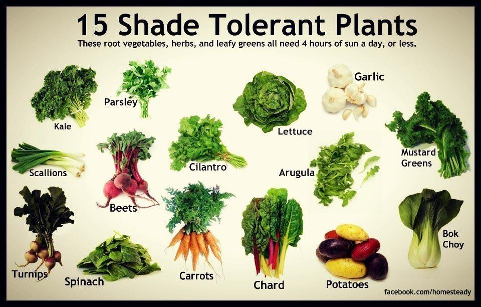 Shade Loving Garden Plants