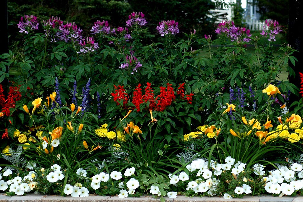Shade Perennial Garden Plans
