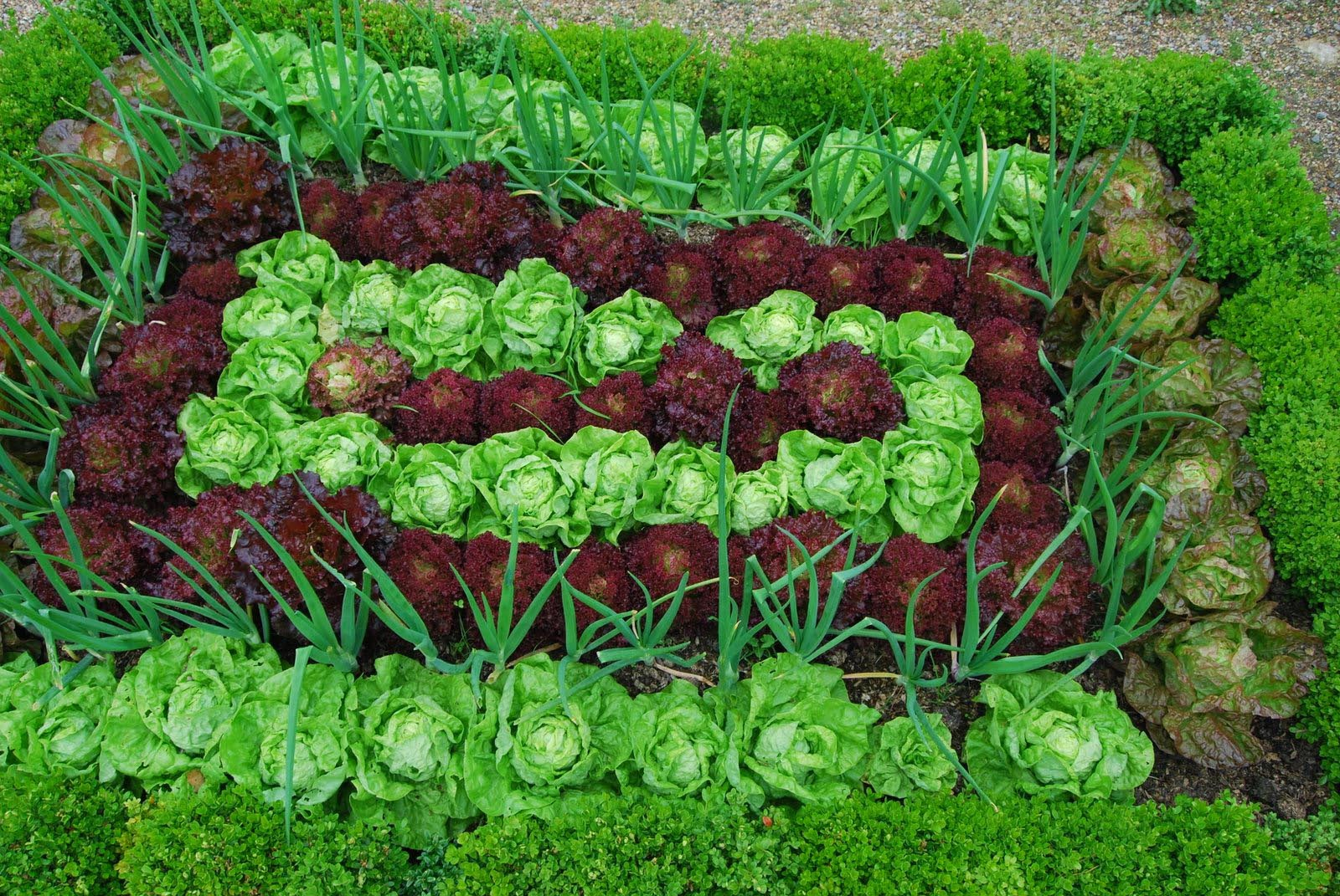 Shade Tolerant Garden Plants