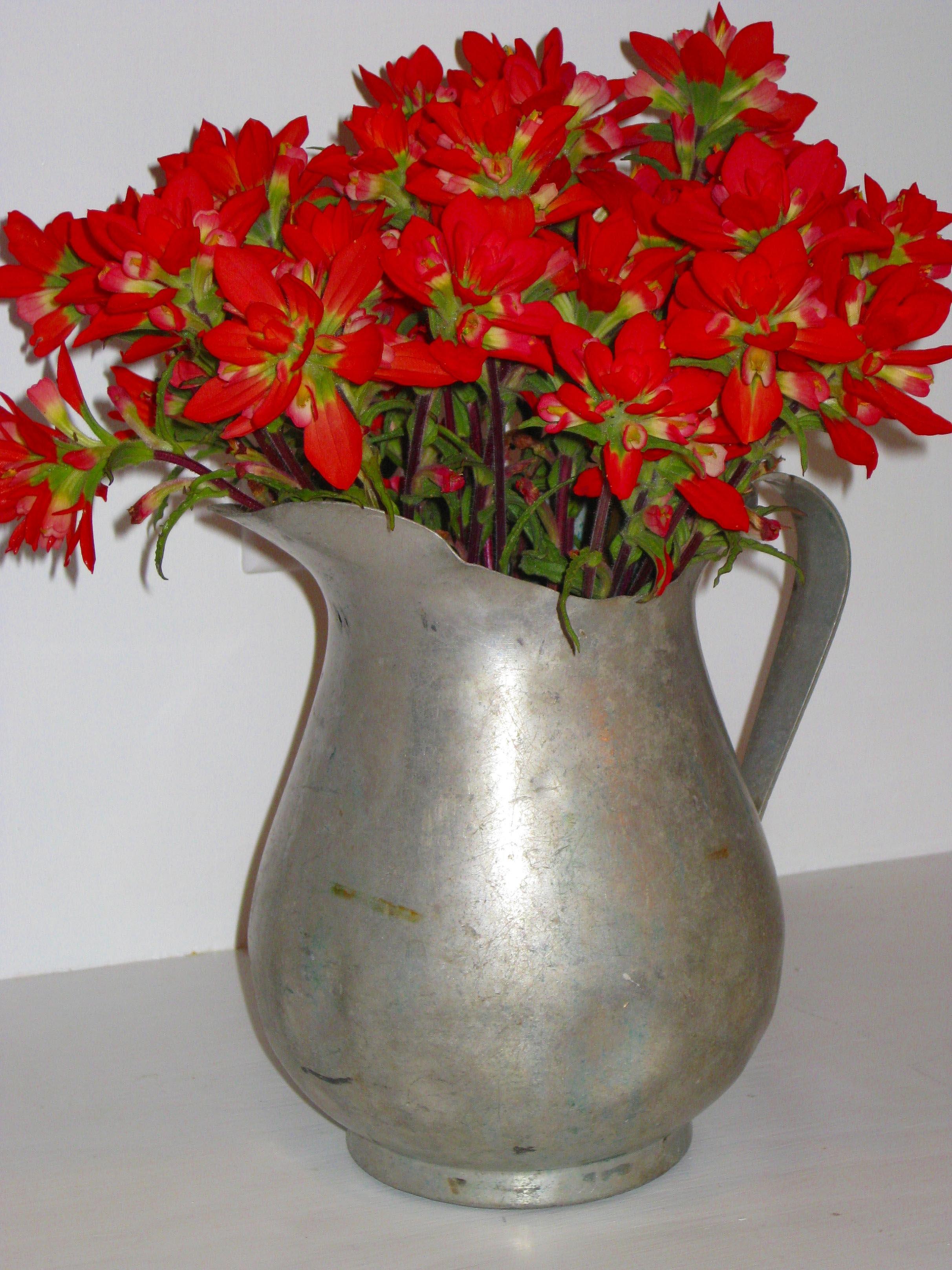 Silk Indian Paintbrush Flowers