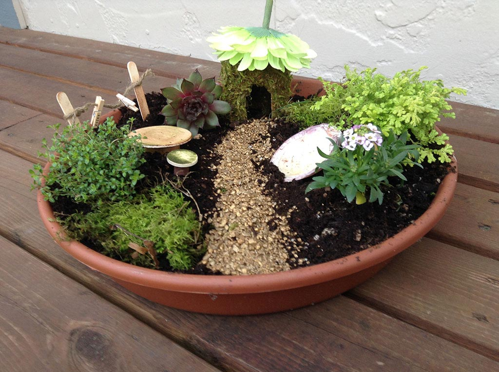 Small Fairy Garden Plants