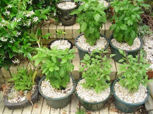Small Herb Garden in Pots