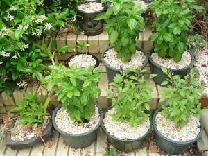 Small Herb Garden in Pots