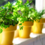 Small Herb Garden Pots