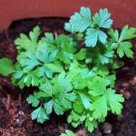 Small Indoor Herb Garden
