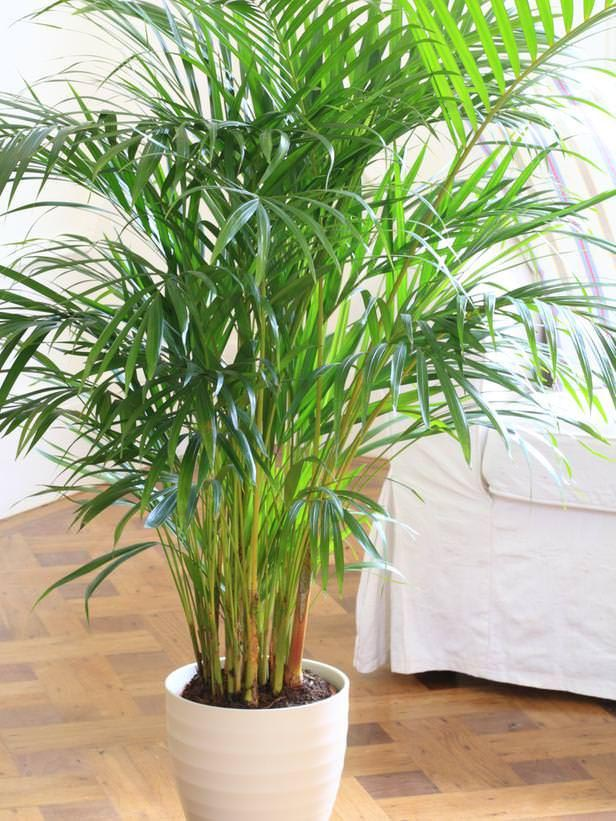 Small Indoor Plants Low Maintenance