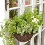 Small Space Herb Garden Ideas