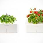 Smart Pot Herb Garden