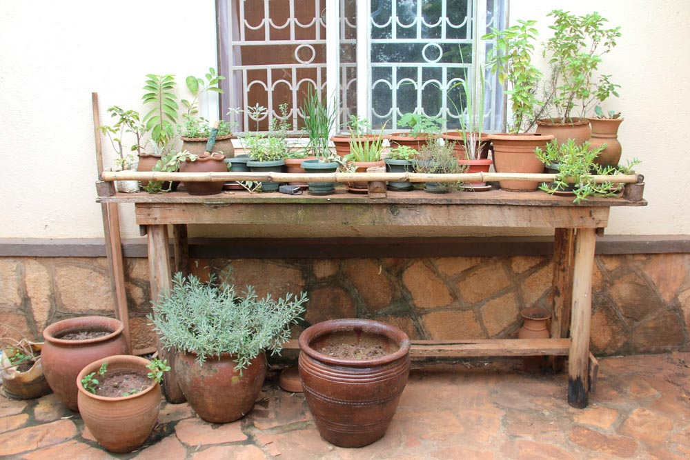 Starting a Patio Herb Garden