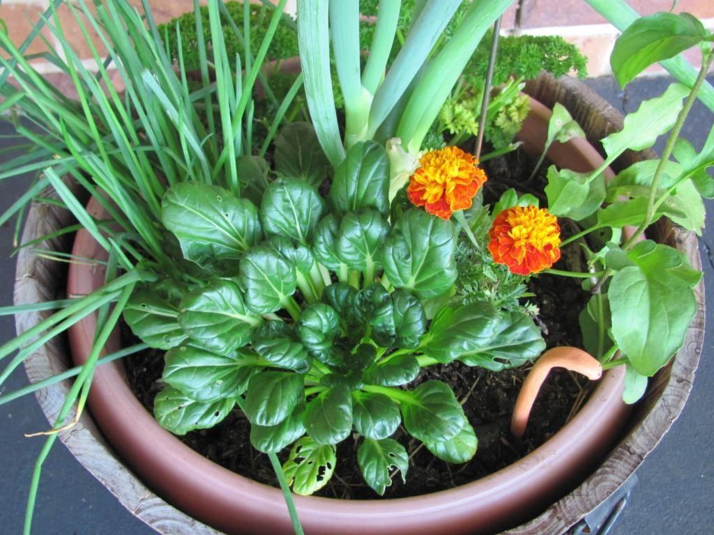 Starting a Small Herb Garden