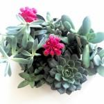 Starting an Indoor Succulent Garden