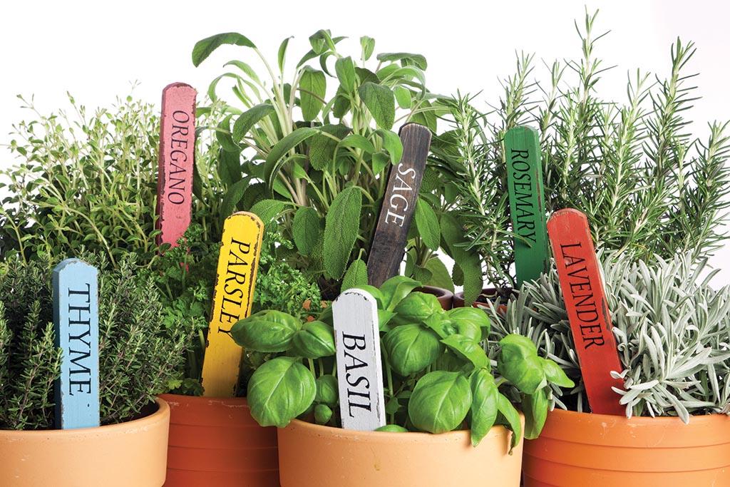 Starting Indoor Herb Garden in Winter