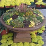 Succulent Container Garden Care