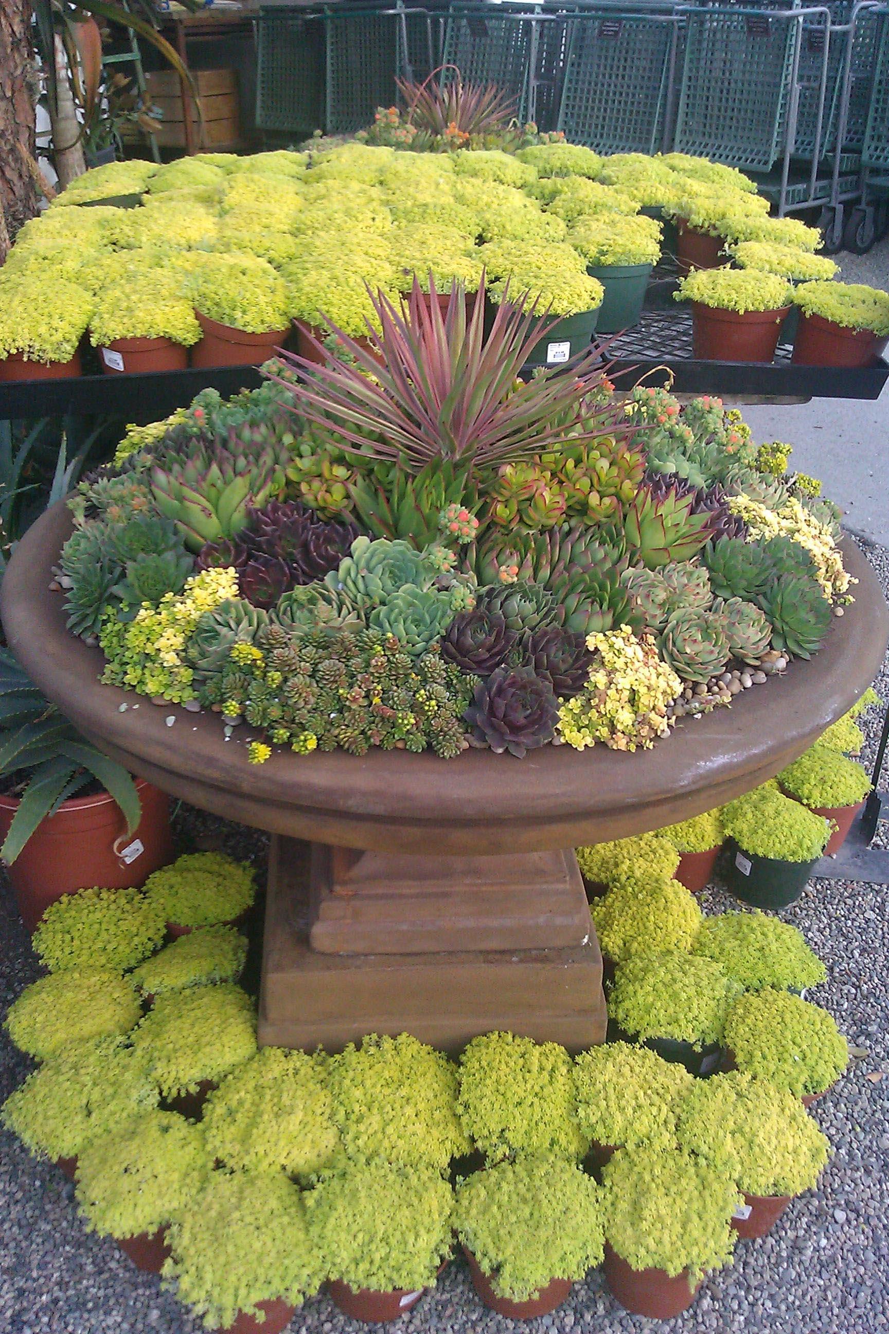 Succulent Container Garden Care
