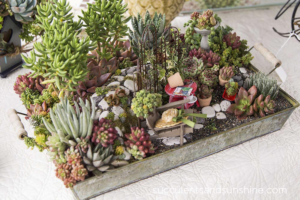 Succulent Container Garden Ideas